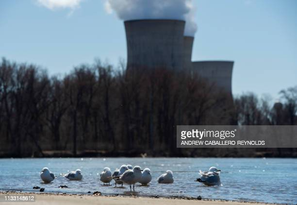Birds rest on the banks of the Susquehanna river near the nuclear plant on Three Mile Island with the operational plant run by Exelon Generation in...
