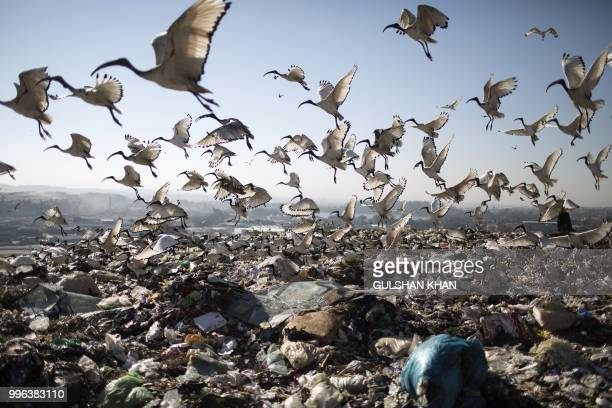 TOPSHOT Birds scavenge the waste at Robinson Deep landfill Johannesburg's largest landfill on June 29 2018