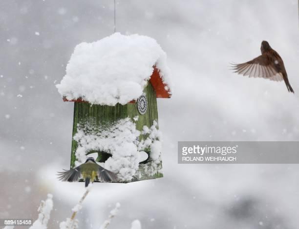 Birds seek some food in a bird house covered in snow on December 10 2017 in Muelheim an der Ruhr western Germany / AFP PHOTO / dpa / Roland Weihrauch...