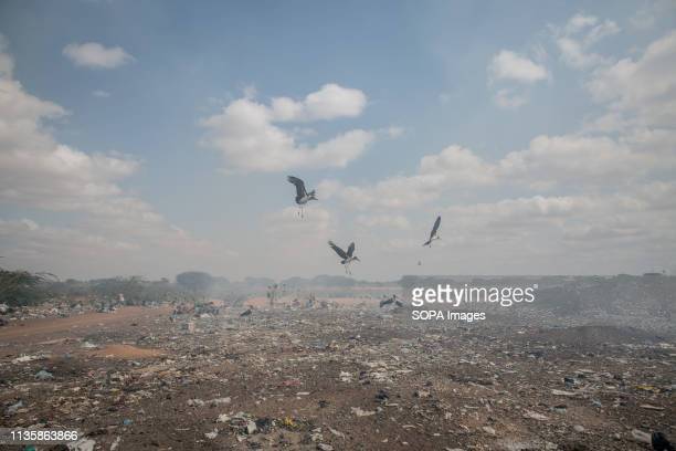 Birds seen flying above burning rubbish in the refugee camp. Dadaab is one of the largest refugee camps in the world. More than 200,000 refugees live...