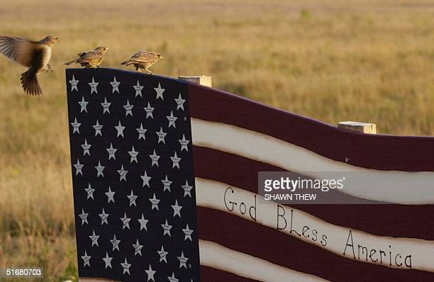 Birds sit on a flight 93 memorial marker with each victims name represented by a star 11 August 2002 at the temporary flight 93 memorial overlooking...