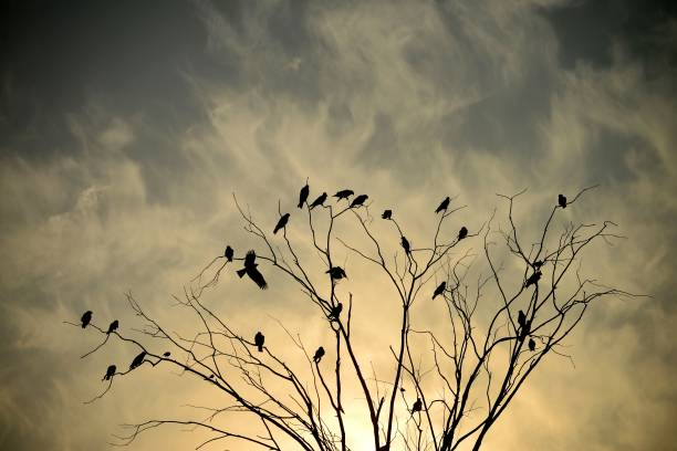 Birds sit on tree branches during sunset in Jalandhar on January 10 2018 / AFP PHOTO / Shammi MEHRA