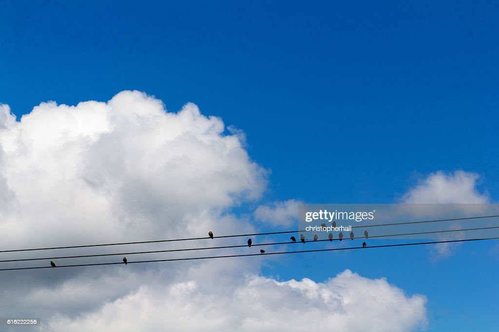 Birds sitting on wires against a blue sky : Stock Photo