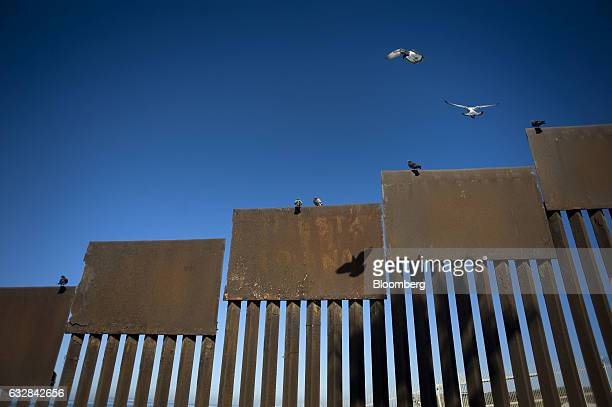 Birds stand on a section of the border wall that separates the US and Mexico in Tijuana Mexico on Wednesday Jan 25 2017 US President Donald Trump...