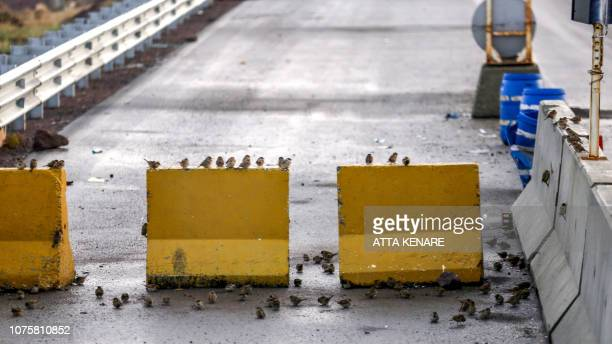 Birds stand on concrete barriers along the Shahid Kalantari causeway which crosses the salt lake of Urmia in the northwest of Iran which had been...