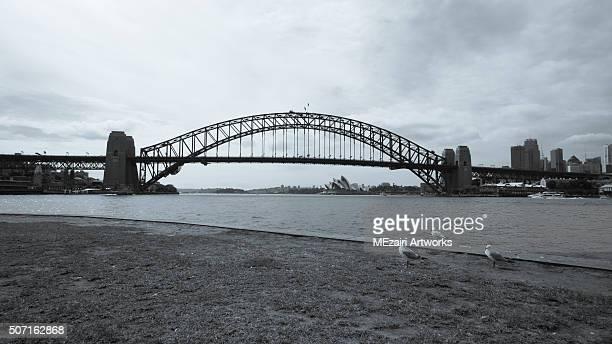 Birds staring at Sydney Harbor Bridge and Opera House