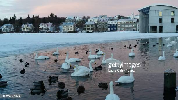 Birds Swimming In Lake By Houses Against Sky During Winter