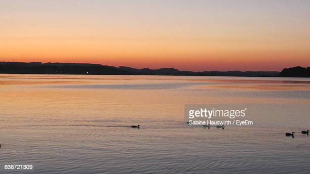 birds swimming in river against sky during sunset - sabine hauswirth stock pictures, royalty-free photos & images