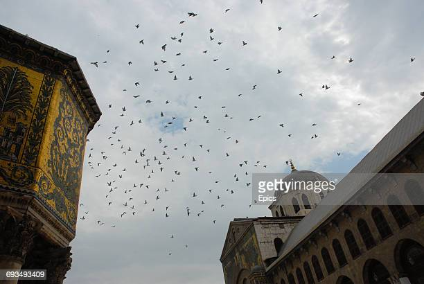 Birds take flight over the Umayyad Mosque Damascus Syria