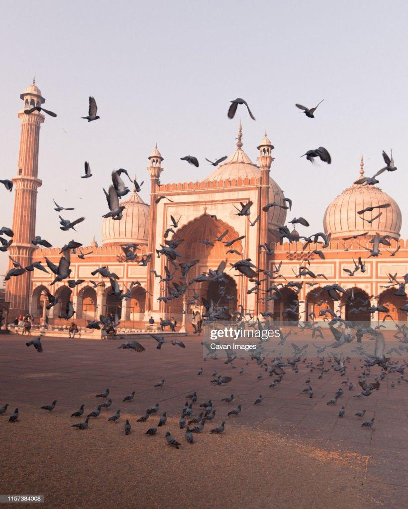 Birds taking flight at Jama Masjid : Stock Photo