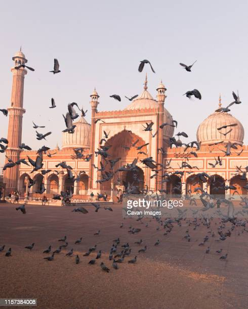 birds taking flight at jama masjid - jama masjid delhi stock pictures, royalty-free photos & images