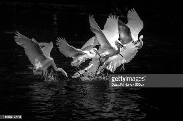birds taking off - off stock pictures, royalty-free photos & images