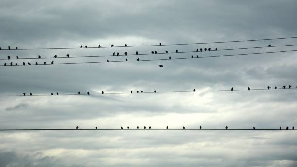 Birds Upon the Wire