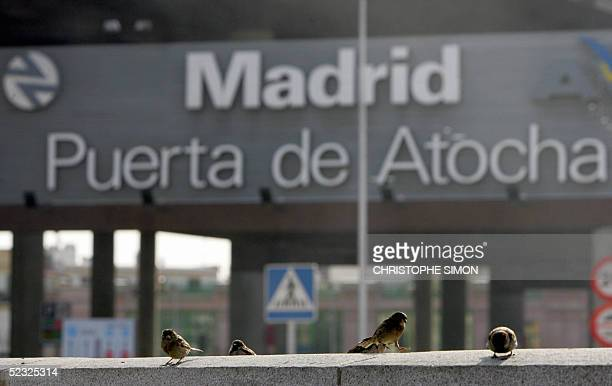 Birds walk on a wall next to Atocha's railway station in Madrid 09 March 2005 two days before the anniversary oflast year's train bombings in Madrid...