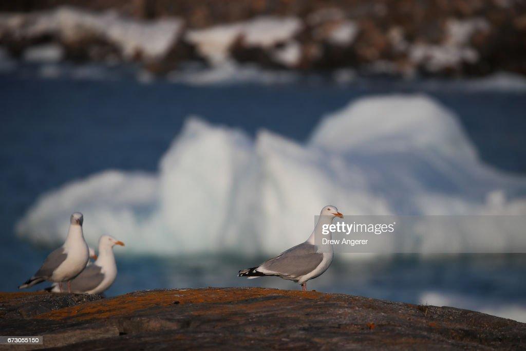 Icebergs Off Coast Of Canada's Newfoundland Draw Tourists To Area : News Photo