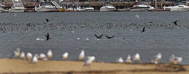Dorchester Shoreline Near Tenean Beach