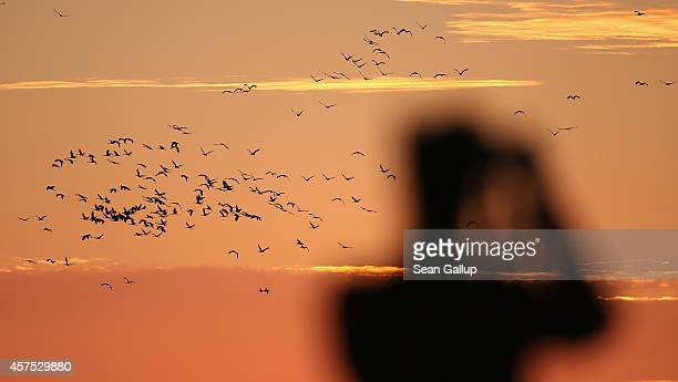 A birdwatching enthusiast looks on as waves of cranes return from foraging for food during the day to spend the night in the marshes on October 19...