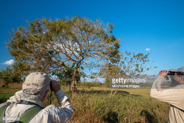 Birdwatching in Pantanal, Brazil