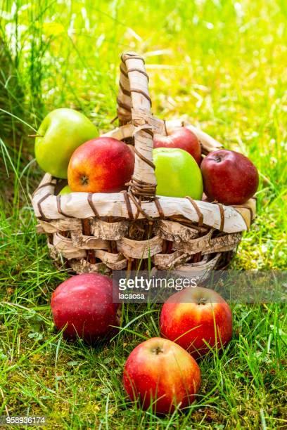 Birkenkorb mit verschiedenfarbigen Äpfeln