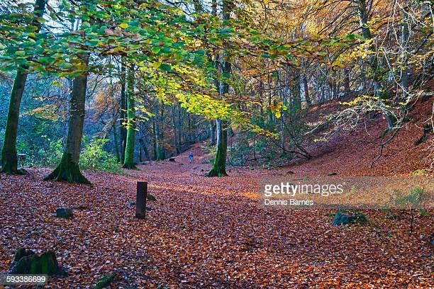 Birks of Aberfeldy, Autumn, Perthshire, Scotland
