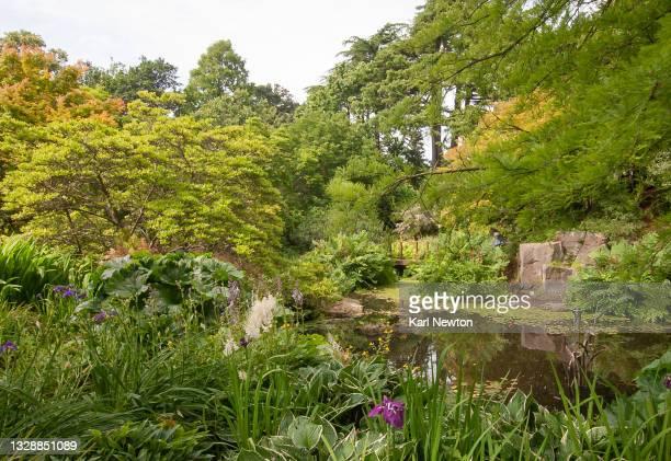 birmingham botanical gardens - botanical garden stock pictures, royalty-free photos & images