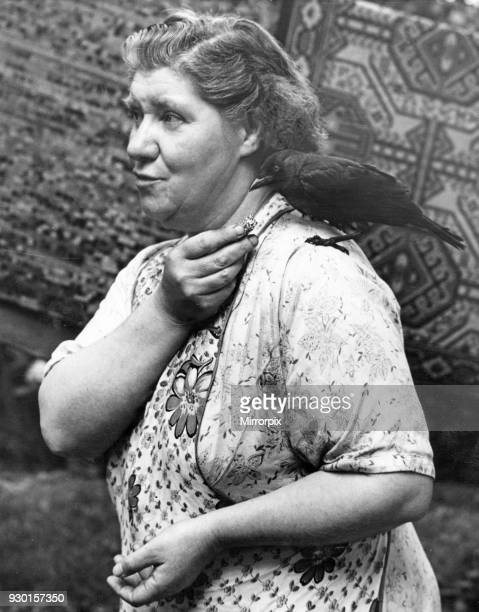 Birmingham housewife feeds her pet jackdaw whilst in the garden beating her rugs 29th November 1953