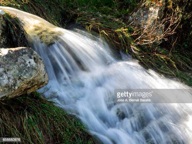 birth of a river of water mountain cleans, that appears from a hole in a rock with roots and moss in the nature - arbusto stock pictures, royalty-free photos & images