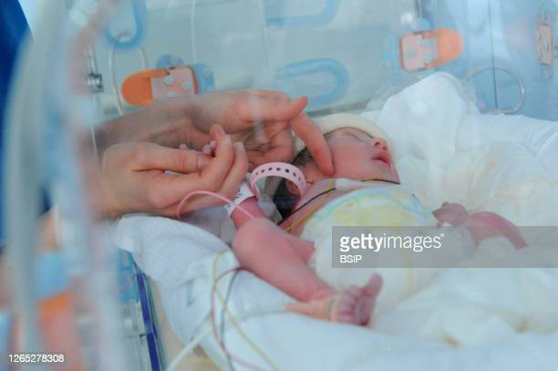 Birth of twins by cesarean section. The twins placed in the incubator are taken to the treatment room so that the pediatrician, the pediatric nurse,...