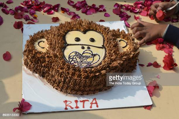 A birthday cake to celebrate the birthday of Rita a 58yearold chimpanzee the oldest member of the Delhi Zoo in Delhi
