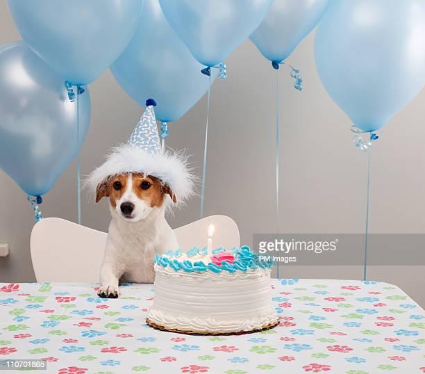 birthday dog - birthday balloons - fotografias e filmes do acervo