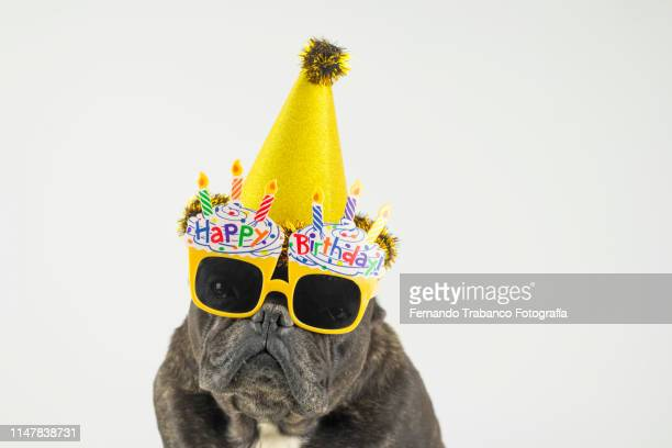 birthday dog - happy birthday stock pictures, royalty-free photos & images