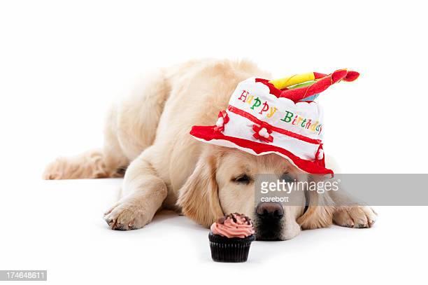 Happy Birthday Golden Retriever Stock Pictures Royalty Free