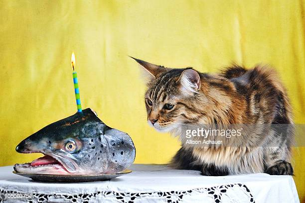 Birthday fish head with candle for a kitten