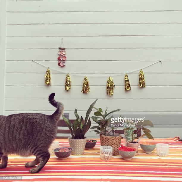 birthday party decorations with cat - knackiger po stock-fotos und bilder