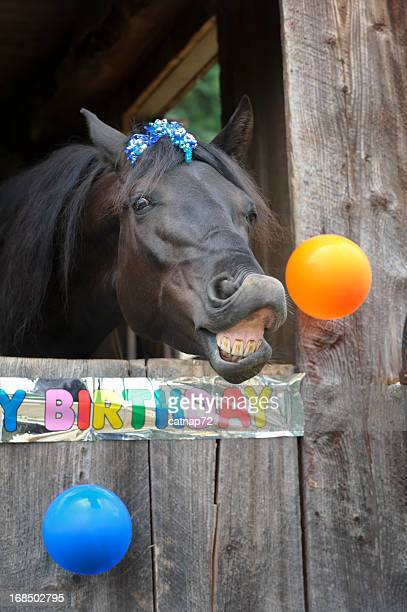 Birthday Party Horse Portrait, Toothy Grin