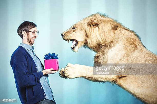 birthday present for a lion - lion feline stock pictures, royalty-free photos & images