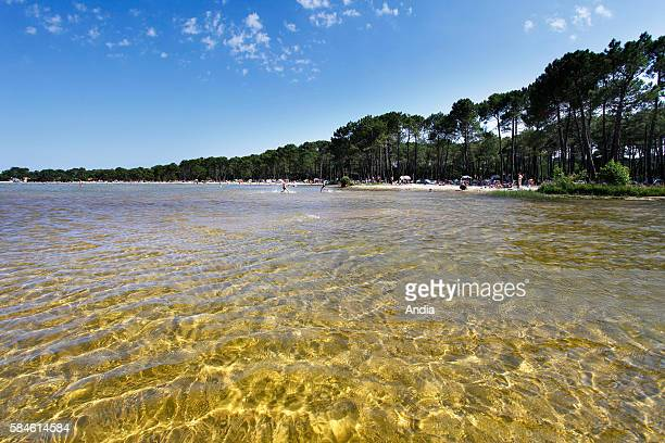 Beaches in the shade of the Landes forest