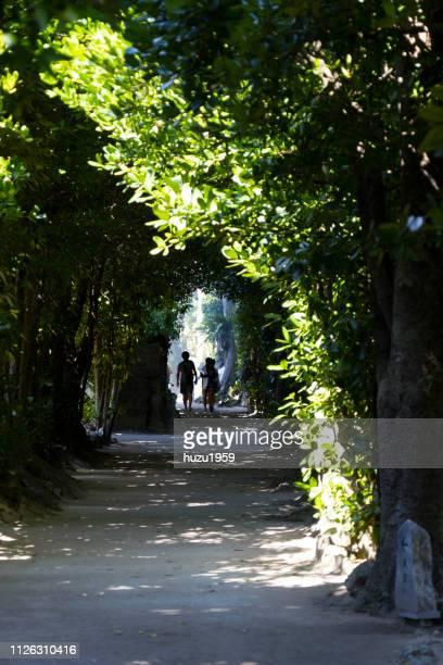 biseno fukugi namiki (fukugi trees in bise) - アベニュー ストックフォトと画像
