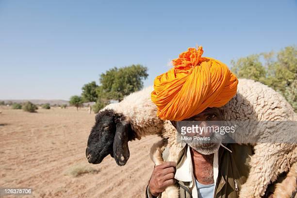 Bishnoi shepherd carrying sheep, Thar desert, Rajasthan, India