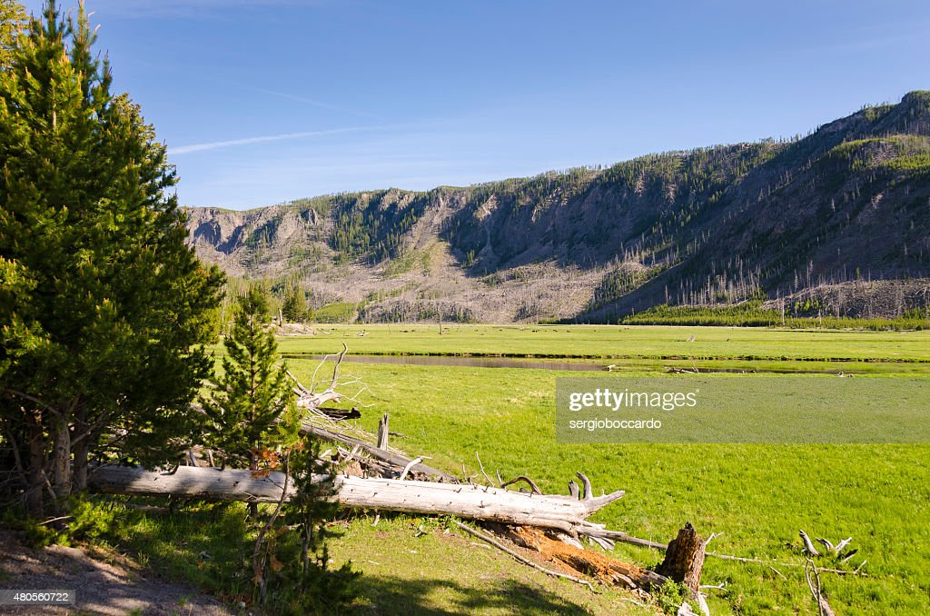 bison in Yellowstone : Stock Photo