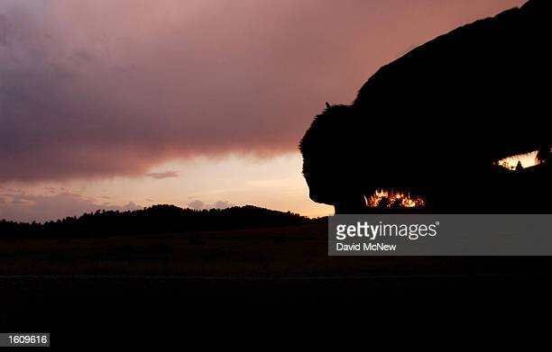 A bison is silhouetted at sunset in Wind Cave National Park August 14 2001 in the southern Black Hills of South Dakota Millions of bison were...