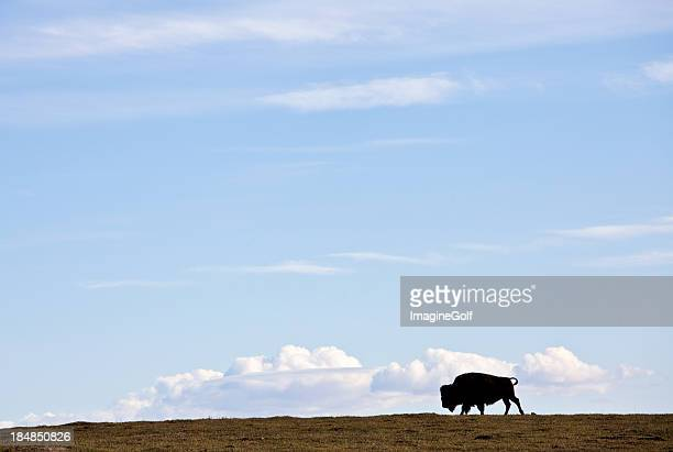 A bison silhouette against a blue sky with a copy space