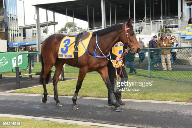 Bit of a Lad parades before the Greg Bull Painting 1JW Hurdle at Warrnambool Racecourse on July 08 2018 in Warrnambool Australia