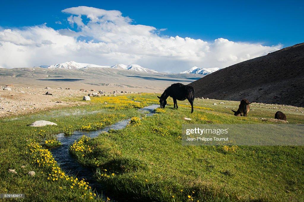 A bit of heaven in the Pamir mountains : Stock Photo