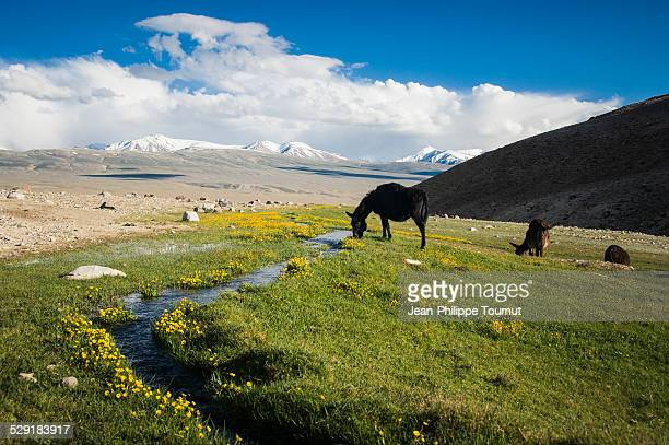 a bit of heaven in the pamir mountains - badakhshan stock pictures, royalty-free photos & images
