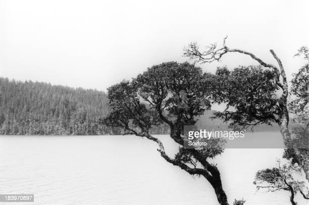 Bita Lake, Zhongdian region, Yunnan province, China. Mar 2002