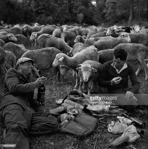 Bivouac during the seasonal move to summer pastures, France in 1958.