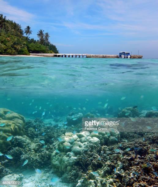 Biyadhoo Island Above and Underwater