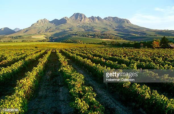 Blaauwklippen Wine Estate Stellenbosch Western Cape