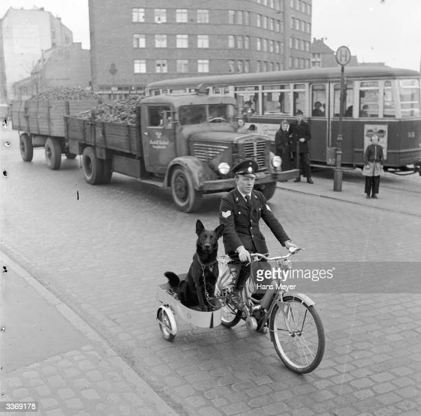 Black Alsatian police dog Astor riding in a sidecar powered by Hamburg police sergeant Ernst Muller who regards the dog to be the 'eyes in the back...